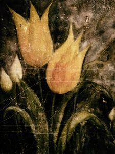 Gele tulpen in het voorjaar 's nachts