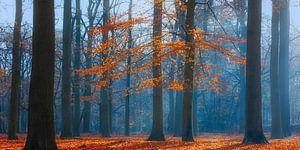 Herfstochtend in het beukenbos, Utrechtse Heuvelrug, Nederland van Sjaak den Breeje Landschapsfotografie
