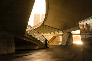 Am frühen Morgen unter der Erasmus-Brücke von Ronald van der Zon
