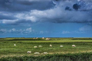 Het Noorderleeg met schapen en koeien op een dobbe  met donker weer boven de Wadden. van