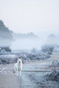 Hond op heide in de mist