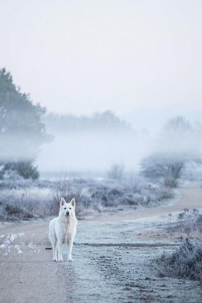 Hond op heide in de mist van Rosalie Oosterom