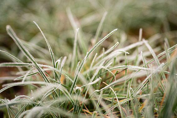 Rijp op groen gras, fotoprint