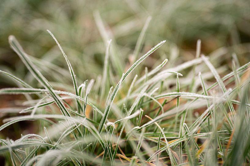 Rijp op groen gras, fotoprint van Manja Herrebrugh - Outdoor by Manja