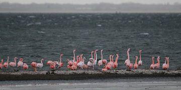 flamingo's 5  van Marloes van der Beek-Rietveld