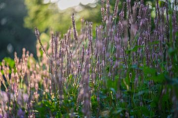 sonnige Sommerblumen von Tania Perneel