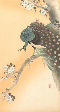 Pfau im Kirschbaum von Ohara Koson