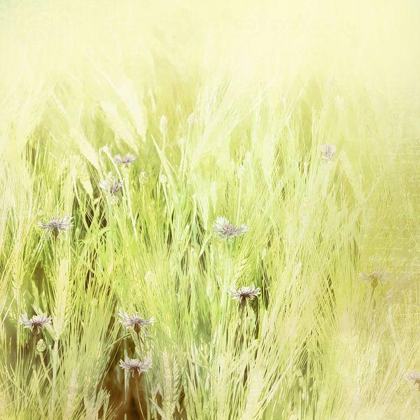 Kornblumen im Kornfeld von Andreas Wemmje