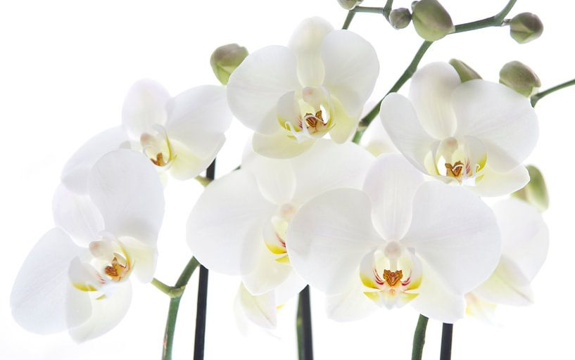 Orchids van Anita Servaas