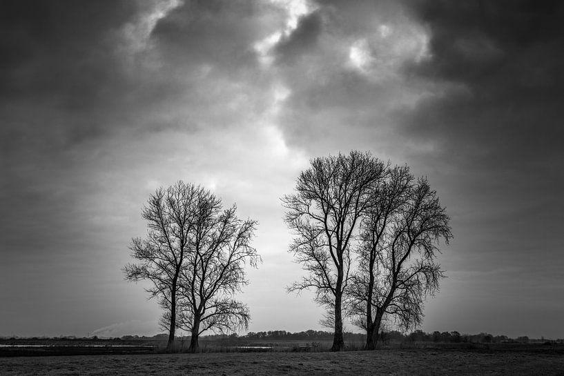 Duo's: 2 x 2 bomen onder een dreigende lucht van R Smallenbroek