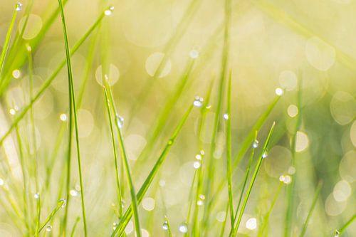Lente frisheid - dauw in het gras