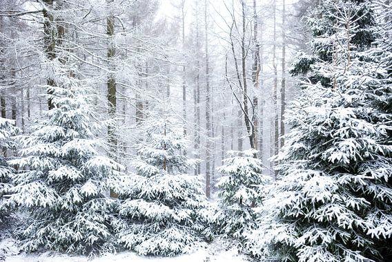 Winter Wald Motiv van Oliver Henze