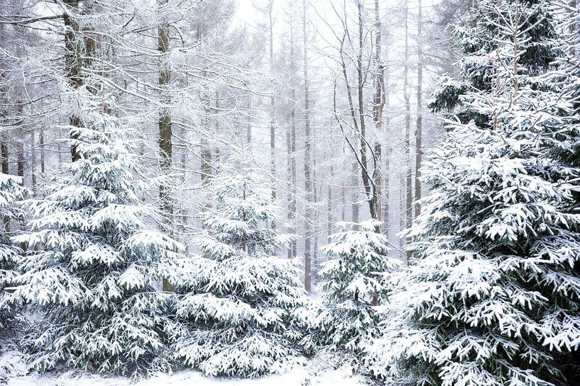 Winter Wald Motiv von Oliver Henze