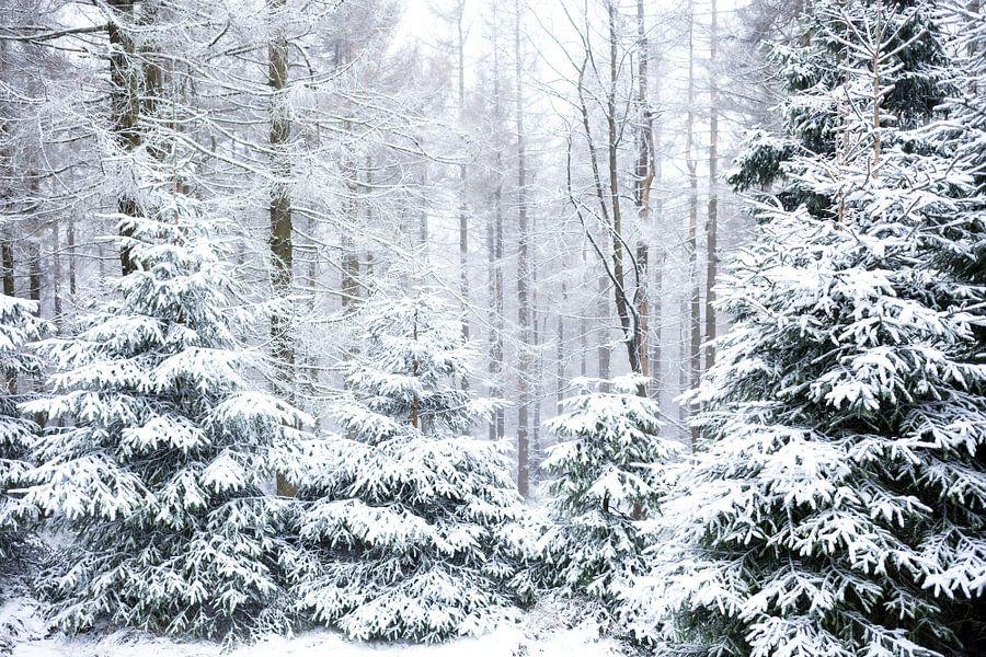 Winter Wald Motiv