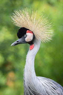 Close up van een grijze kraanvogel van Ben Schonewille