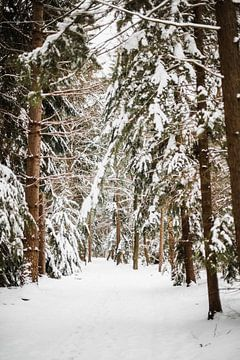 Zeldzaam winters Twents boslandschap | outdoor photography van Holly Klein Oonk