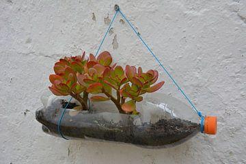 Mini jardin succulent en bouteille sur le mur sur My Footprints