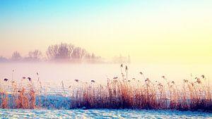 zonnige winter