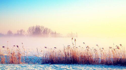 zonnige winter  van
