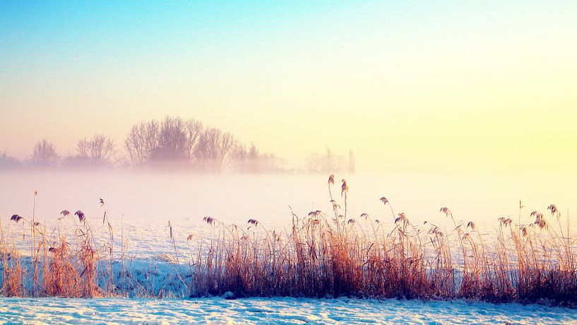 zonnige winter  van Marianne Bras