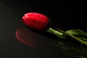 Eine Tulpe anders betrachtet von As Janson