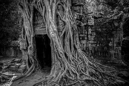 Ta prohm, Angkor Wat van Studio W&W