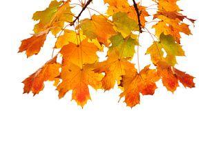 Gekleurde herfstbladeren van