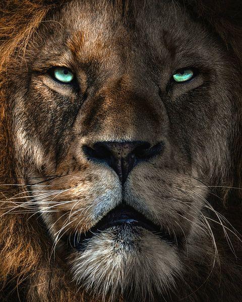 through the eyes of a lion van Bert Hooijer