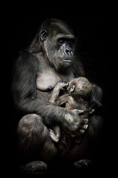 Gorilla-Affenmutter (oder ihre Schwester) stillt ihr kleines Baby, süße Szene. isolierter schwarzer  von Michael Semenov