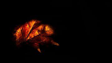 Herfst van Annelien van der Heide