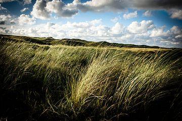 Wogendes Dünengras | Reisefotografie von Diana van Neck Photography