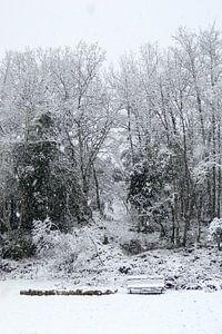 Eikenbomen in de sneeuw van