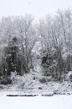 Eikenbomen in de sneeuw von Marcel Tiemens