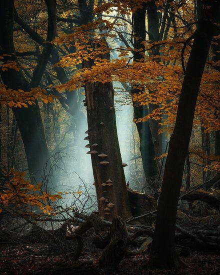 Zonnestralen in het Speulderbos van Martin Podt