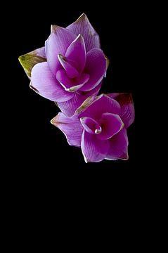 Paarse bloemen met zwarte achtergond sur Doris van Meggelen