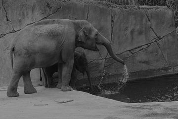 Olifanten spelen met water van Ima Rhebok
