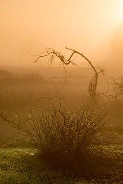 Strabrechtse Heide 274 sur Deshamer