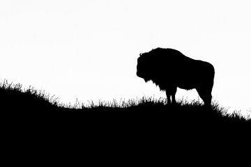 Europese Bizon zwart wit silhouet van Marianne Jonkman