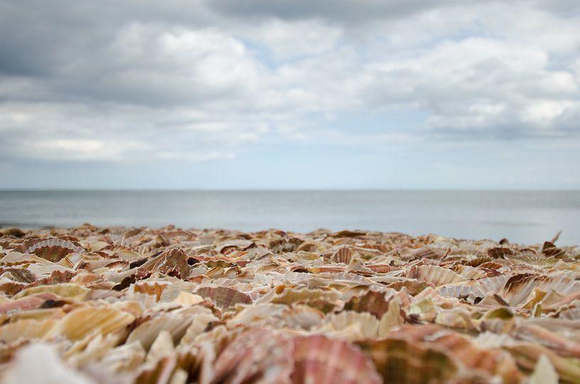Strand voller Muscheln von Mark Bolijn