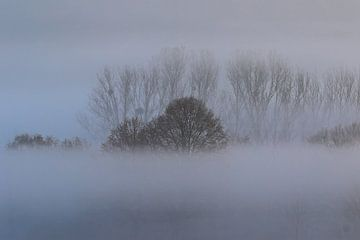 Bäume im Nebel von Bernhard Kaiser