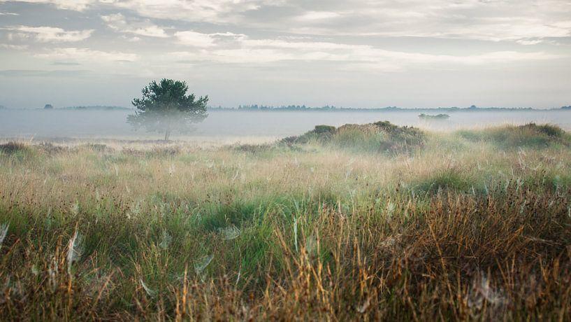 Ochtendgloren op het Dwingelderveld, Drenthe van Fotografiecor .nl