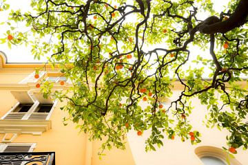 Sinaasappelboom in Monaco sur Johan Kalthof