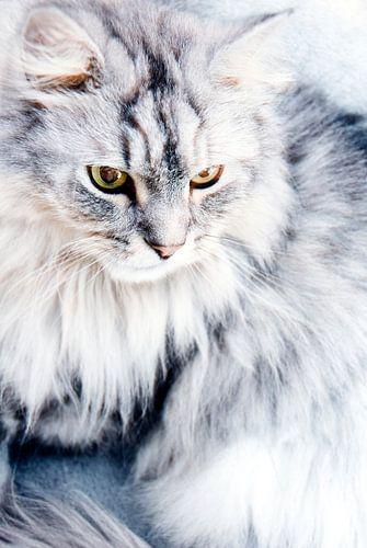 Snowwhite van Mariska Hofman