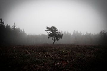 Eenzame boom van Dagmar van Nieuwpoort