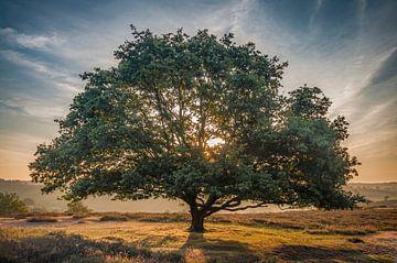The tree von Peter Bijsterveld