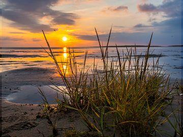 Waddenzee aan de Noordzee bij zonsondergang van Animaflora PicsStock