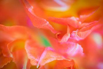 Tulpenblätter von Annie Jakobs
