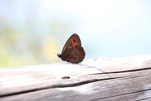 Zomer vlinder