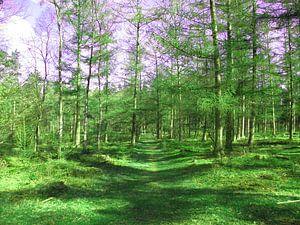 Wald Lassen Sie uns diesen Weg gehen