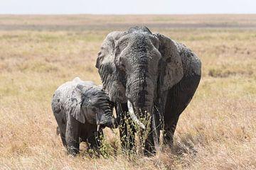Op safari in Afrika: moeder olifant met jong op de Serengeti vlakte van Koolspix